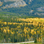 Fall at Denali Nat'l Park