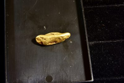 gold Nugget back